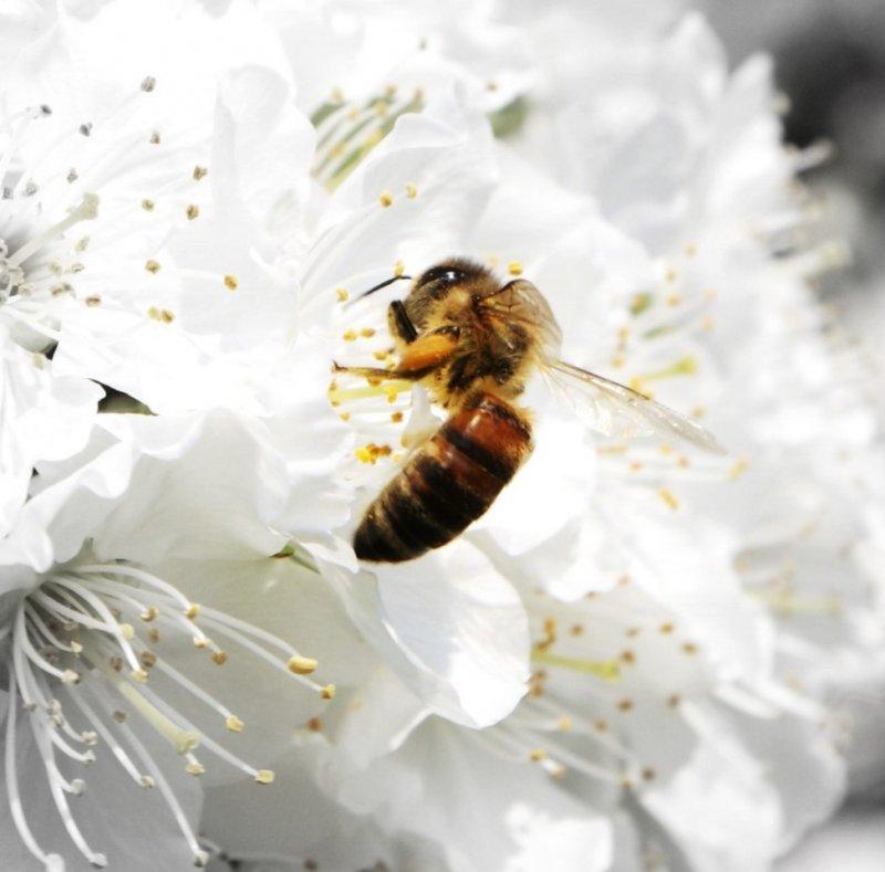 méhecske.jpg